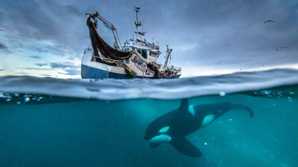 whale-1014x570